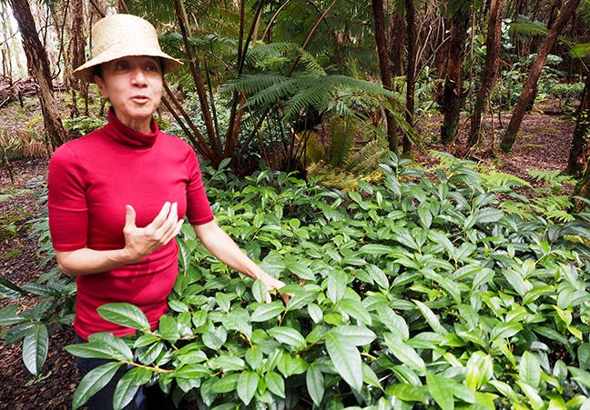 Eva Lee Hawaii Tea Garden