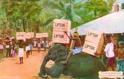 Lipton loading elephants in 19th century Ceylon
