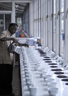 Man testing teas